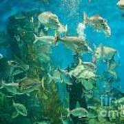 Cool Aquarium Poster by Ray Warren