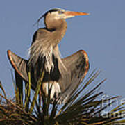 Great Blue Heron Air Conditioning Poster