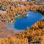 Cooney Lake Larches Poster
