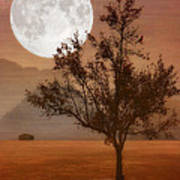 Copper Tree Poster by Tom York Images