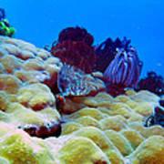 Corals Underwater Poster