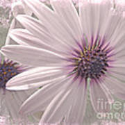 Coreopsis - Dreaming In Pink Poster