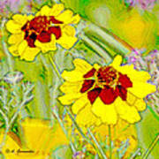 Coreopsis Flowers Poster