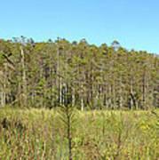 Corkscrew Swamp 1 Poster