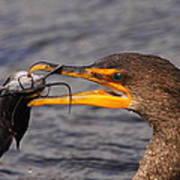 Cormorant Catching Catfish Poster
