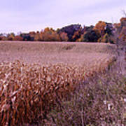 Corn Field In The Fall Poster