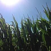 Corn Maze 02 Poster