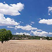 Cornfield And Finca Near Sineu Poster