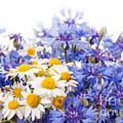 Cornflower And Chamomile Bunch Blooms  Poster