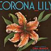 Corona Lily Crate Label Poster