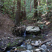 Corte Madera Creek On Mt. Tam In 2008 Poster