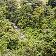 Costa Rica Zip Line View Poster