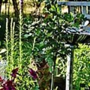 Cottage Bird Garden Poster
