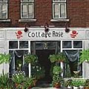 Cottage Rose Poster