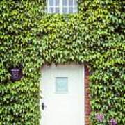 Cottage With Ivy Poster