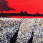 Cotton Field Poster