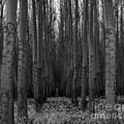 Cottonwood Alley Monochrome Poster