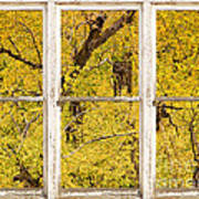 Cottonwood Fall Foliage Colors Rustic Farm Window View Poster