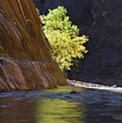 Cottonwood On The Virgin River Poster