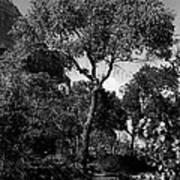 Cottonwood Treem Zion Canyon, Utah. 1929 Poster