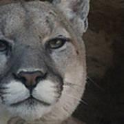 Cougar Digitally Enhanced Poster