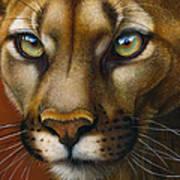 Cougar October 2011 Poster
