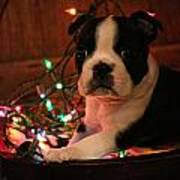 Country Christmas Puppy Poster