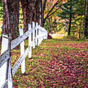 Country Lane Fall Foliage Vermont Poster