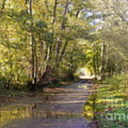 Country Lane In Autumn 3 Poster
