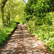 Country Lane Painting Poster