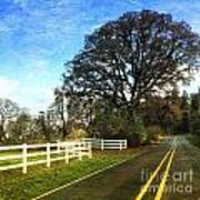 Country Road On Sauvie Island Poster