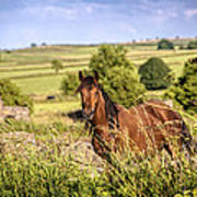 Countryside Horse Poster