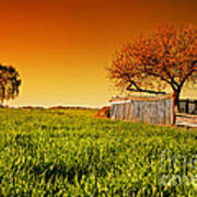 Countryside Orchard Landscape At Sunset. Spring Time Poster
