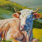 Cow Lying Down  Poster
