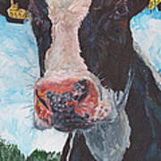 Cow No 05. 0556 Irish Friesian Cow Poster