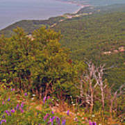 Cow Vetch In Cape Breton Highlands Np-ns Poster