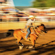 Cowboys Ride And Rope Cattle During San Poster