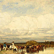 Cows Crossing A Ford Poster