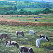 Cows In A Field In The Devon Countryside Poster