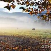 Cows In The Fog Poster