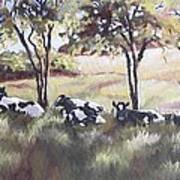 Cows Pasture Poster