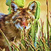 Coyote In The Aloe Poster