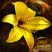 Cozy Yellow Daylily Poster