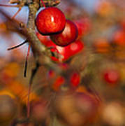 Crab Apple Bright Poster