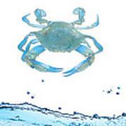 Crab Strolling Around Poster