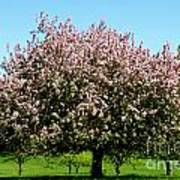 Crabapple Orchard Poster