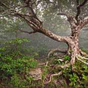 Craggy Gardens Blue Ridge Parkway Asheville Nc - Enduring Craggy Poster by Dave Allen