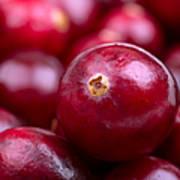Cranberry Closeup Poster by Jane Rix