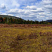 Cranberry Glades Panoramic Poster