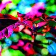 Cranberry Leaf Poster